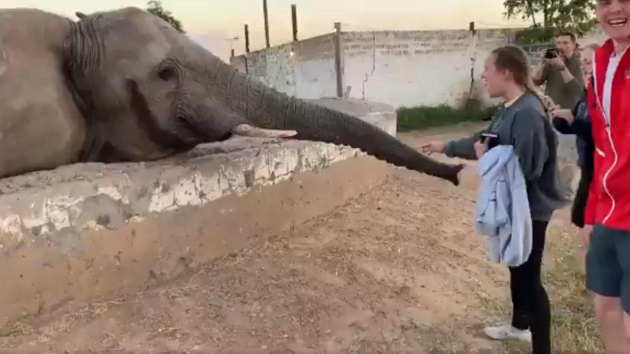 Elefant schlägt Touristin das Handy aus der Hand