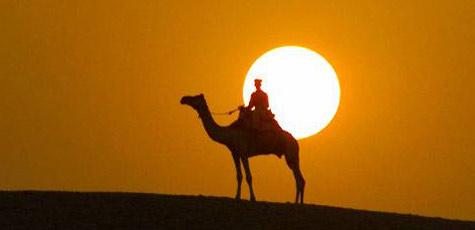 Tiroler Bauer stürzt mit 3,25 Promille von Kamel