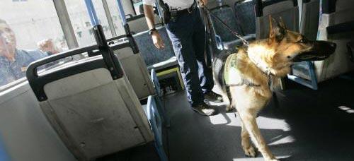 Drogenhunde sollen auf Eltern-Anfrage Kinderzimmer filzen