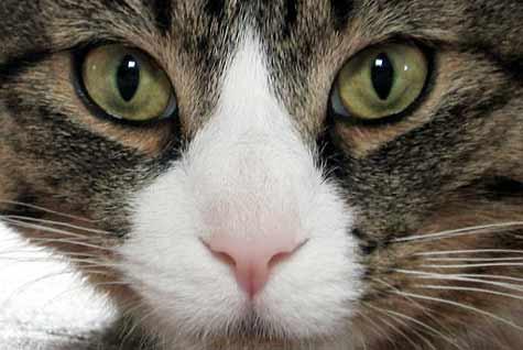 Katze versehentlich per Post verschickt