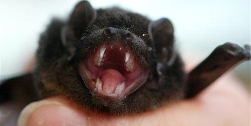 Britin entdeckt schlafende Fledermaus im BH