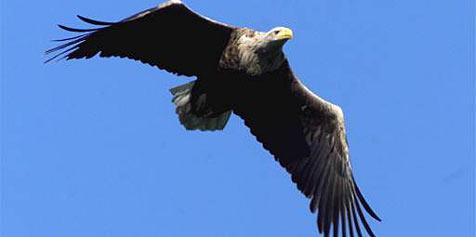 Tiroler Adler stiehlt Pensionistin die Handtasche