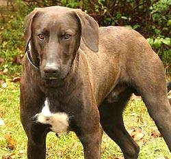 Passantin findet toten Hund im Bezirk Linz-Land (Bild: Chris Koller)