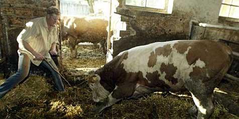 Gleich zwei tote Altbauern in Oberösterreich