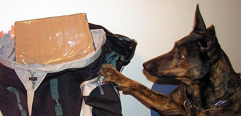 Polizist vergaß, in welchem Koffer Drogen sind (Bild: Andi Schiel)