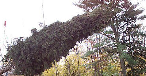 42-jähriger Forstarbeiter von Baum erschlagen