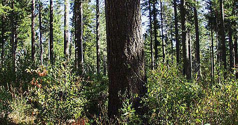 Baumdiebe bedienen sich in Linzer Wald