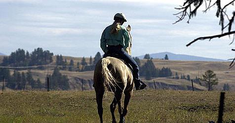 Frau im Bezirk Tulln von Pferd gestürzt