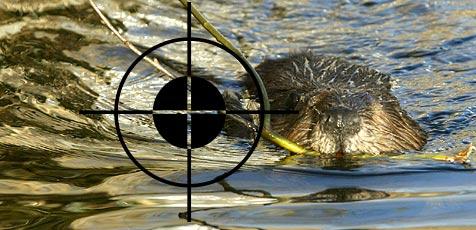 Naturschutz gegen Hüftschüsse (Bild: Christof Birbaumer)