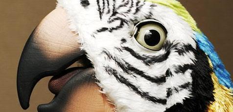 Entflogener Papagei verrät Polizei seine Adresse