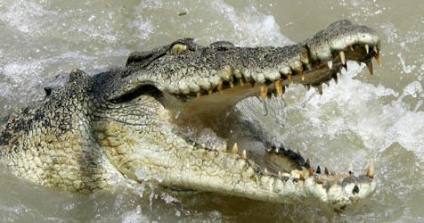 Reptil soll in Hildesheimer Fluss unterwegs sein