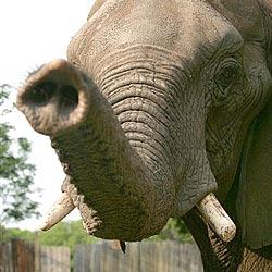 Elefant vergnügt sich auf deutschem Spielplatz