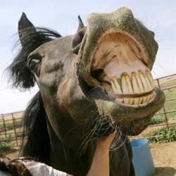 Reiter nimmt Pferd mit auf die Toilette
