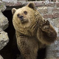 """Ein Bär """"bewacht"""" Sträflinge in Louisiana"""