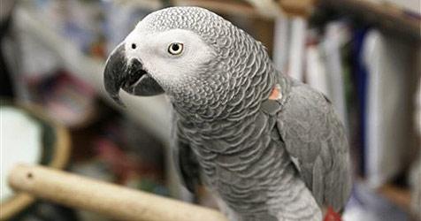 Jaulender Papagei narrt deutsche Polizeibeamte