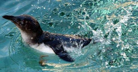 Schüler entführte Pinguin aus deutschem Zoo