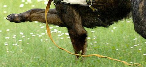 """Hund """"Harry"""" als """"Tatverdächtiger"""" vor Gericht (Bild: dpa/dpaweb/dpa-Zentralbild/Z1006 Matthias Hiekel)"""