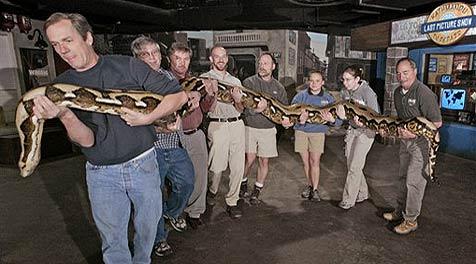 US-Zoo kauft Riesenschlange