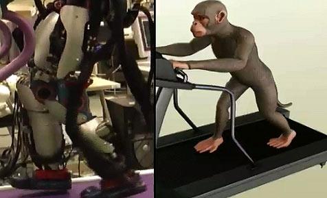 Roboter reagiert auf Kommandos eines Affen (Bild: Duke University Medical Center)
