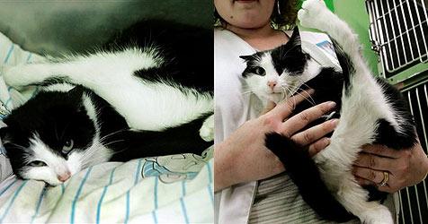 Fünfbeinige Katze in den USA soll operiert werden