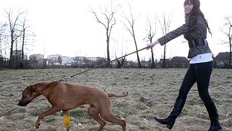 Leinenruck am Halsband macht Hunde krank (Bild: Markus Wenzel)