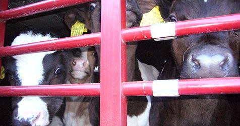 200.000 Unterschriften gegen Tierleid (Bild: Tier-WeGe)