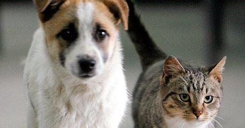 Mit dem Internet zum besten Haustiernamen