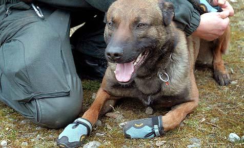 Polizeihunde gehen mit Schuhen auf Streife (Bild: dpa/Polizei Düsseldorf/A9999 Polizei Düsseldorf)