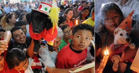 Gottesdienst für Haustiere in Nicaragua (Bild: AFP)