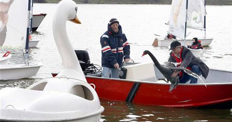 Happy End für Trauerschwan Petra und ihr Boot