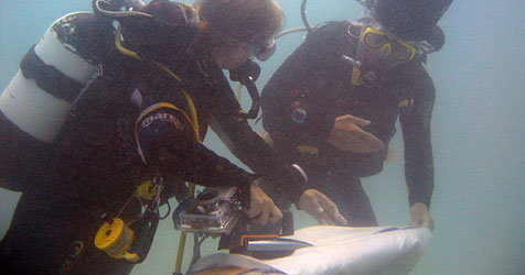 72 Taucher brechen Rekord im Unterwasserbügeln (Bild: www.ExtremeIroning.com)