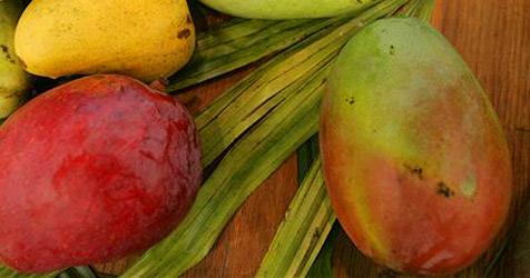 Zwei Mangos um 1.250 Euro versteigert