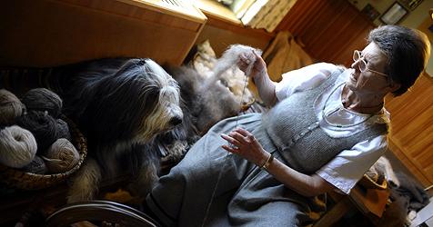 Diese Salzburgerin spinnt Hundehaare zu Wolle (Bild: APA/BARBARA GINDL)