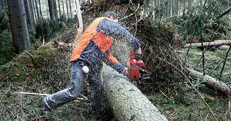 Schwerer Forstunfall - Fichte fällt auf Pensionist (Bild: Pail)