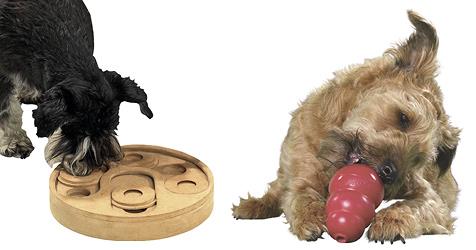 Intelligente Spielideen für kluge Hundeköpfe (Bild: Fressnapf)