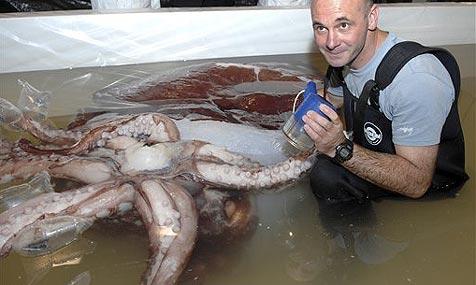 Riesen-Tintenfisch hat größte Tieraugen der Welt