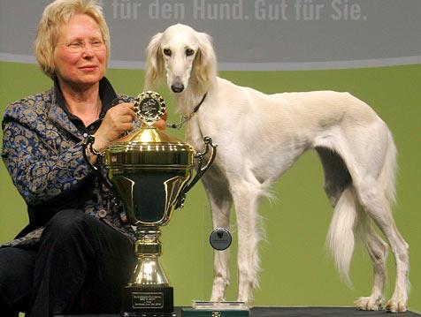 Dakira Sawahim ist Europas schönster Hund