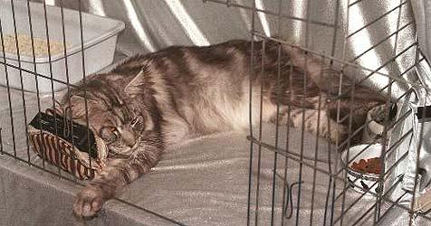Vermisste Katze über Webcam entdeckt