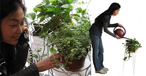 Durstige Pflanzen melden sich bei ihrem Besitzer (Bild: Botanicalls.com)