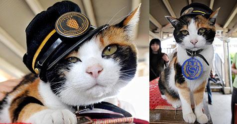 Glückskatze ist Stationsvorsteher in Japan (Bild: AFP)