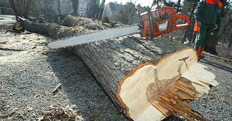 69-Jähriger bei Forstarbeiten schwer verletzt