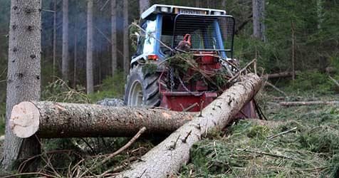 Bei Forstarbeiten gegen abgesägten Stamm gerutscht (Bild: Sepp Pail)