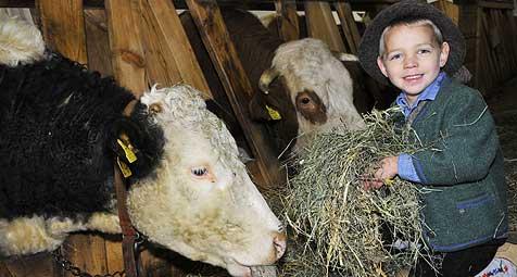 Zähneknirschend liefern die Bauern wieder Milch (Bild: Gabriele Moser)