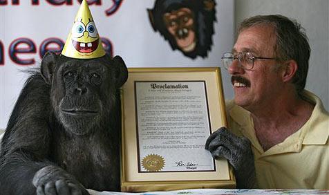 """Cheeta soll """"Walk of Fame""""-Stern erhalten"""