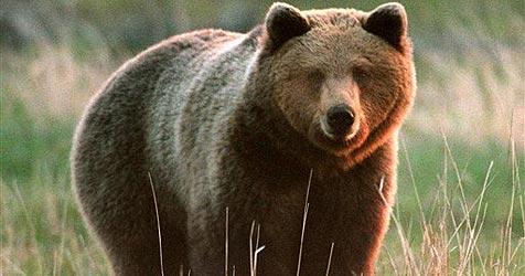 """""""Schoko-Bär"""" bricht in US-Haus ein"""