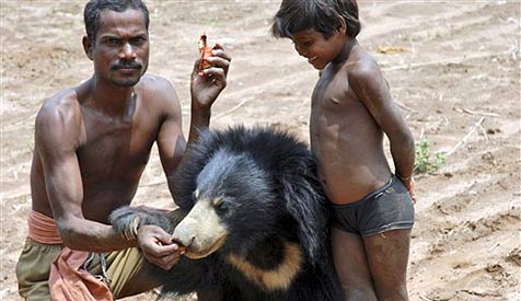 """Inder """"adoptiert"""" Bärenbaby - verhaftet!"""