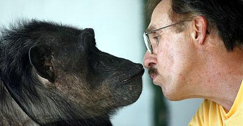 Tarzan-Schimpanse wird mit 76 Jahren Musiker