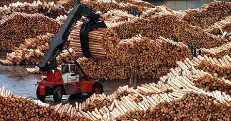 Betrugs-Prozess gegen Salzburger Holzunternehmer (Bild: dpa/Jens Büttner)