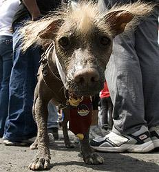 Denkmal für streunende Hunde in Mexiko