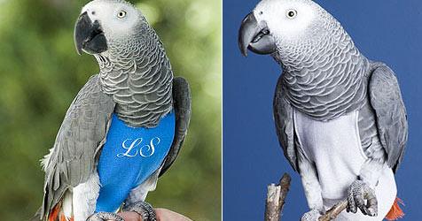 Kanadische Firma verkauft Windeln für Papageien (Bild: http://www.diapersforbirds.com)